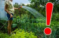 Udatul grădinilor - o practică incorectă, în detrimentul sovejenilor